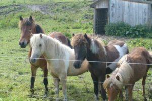 Reitschule Lillemor - unsere Tiere